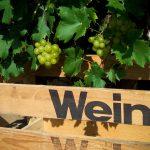 """""""wild onderwegs"""" - Wein trifft wilde Kräuter"""